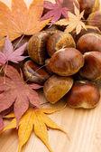 Chestnut in autumn — Stock Photo