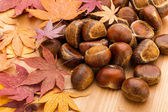 Chestnut and maple leave — Stock Photo