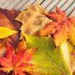 Stock Photo: Dried maple leave