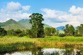 Wetland — Foto Stock