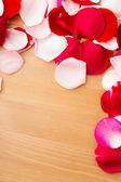 Rose petal — Stock Photo