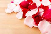 Rose pedal — Stock Photo