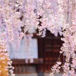 Weeping sakurwith japanese temple background — Stock Photo #39743305