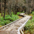 Wooden pathway in forest — Stock Photo