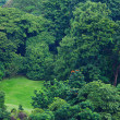 Green forest from top view — Stock Photo