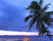 Palm tree and seascape — Stockfoto