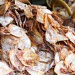 Stock Photo: Dried squid