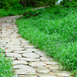 Stock Photo: Stone path in forest