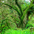Tropical forest — Stock Photo