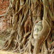 Buddha head in old tree — Foto Stock #40572977