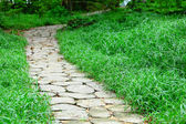 Stone path in forest — Stock Photo