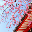 Stock Photo: Japanese temple and sakura