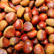 Chestnut — Stock Photo #40649611