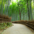 Stock Photo: Bamboo forest in Kyoto