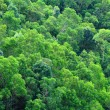 Stock Photo: Green forest on moutain