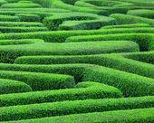 Green maze — Stock Photo