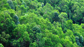 Green forest on moutain — Stock Photo