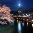 Lake biwa canal with sakura at night — Stock Photo