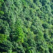 Stock Photo: Forest on moutain