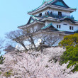 Stock Photo: Wakayamcastle with sakura