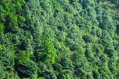 Forest on moutain — Stock Photo