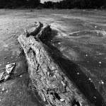 Drift wood — Stock Photo #41081433