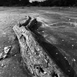 Drift wood — Stock Photo #41081433
