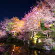 Sakura and river at night — Stock Photo