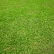 Green lawn — Stock Photo #41082159
