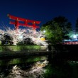 Sakura and torii at night — Stock Photo