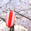 Red lantern and sakura — Stock Photo
