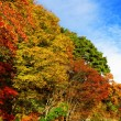 Colourful forest with blue sky — Stock Photo