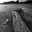Drift wood — Stock Photo #41465465