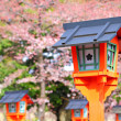 Sakura with red lantern — Stock Photo