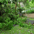 Stock Photo: Garden damaged by typhoon