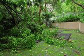 Tuin beschadigd door typhoon — Zdjęcie stockowe