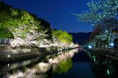 Biwa lake canal with sakura tree — Stock Photo
