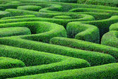 Green plant maze — Stock Photo