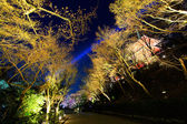 Japanese temple and sakura tree at night — Stock Photo