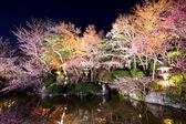 Sakura tree with river — Stock Photo