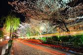 Gion with sakura tree at night — Stock Photo