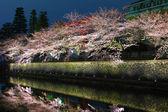 Biwa lake canal with sakura tree at night — Stock Photo