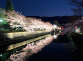 Biwa lake canal with sakura tree at night — Stock Photo