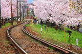 Railway and sakura tree — Stock Photo