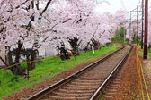 Railway with sakura tree — Stock Photo