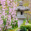 Japanese garden with stone lantern and weeping sakura — Stock Photo
