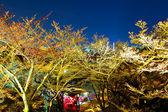 Sakura tree at night — Stock Photo