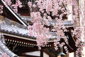 Sakura tree in japanese temple — Stock Photo