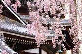 Sakura tree in japanese temple — Stock Photo
