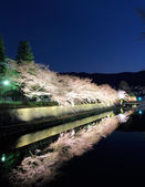 Biwa canal with sakura tree in Kyoto — Stock Photo